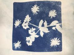 cyanotype plants